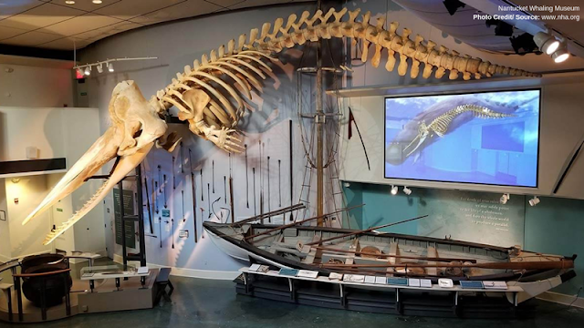 sperm whale skeleton hanging above other exhibits