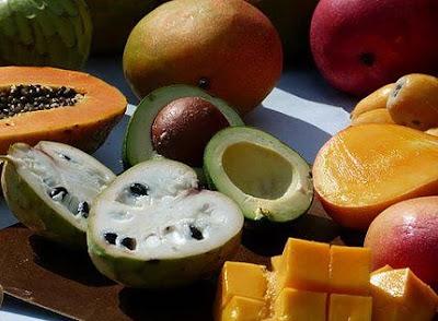 visita guiada a finca de fruta tropical costa del sol