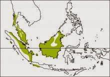 Banded woodpecker Chrysophlegma miniaceum