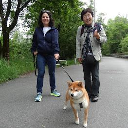 ベルゲン郊外で会った柴犬