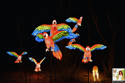 Illuminated Parrots Bronx Zoo Holiday of Lights 2019