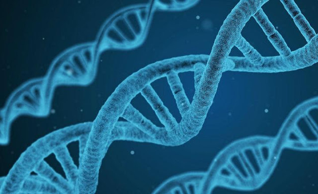 Definición epigenética salud
