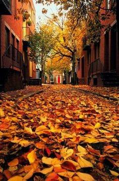 fall is coming la ptite bulle delo