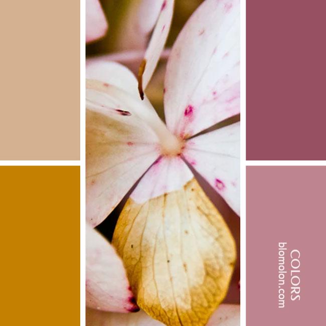 variedad_en_color_paletas_de_combinacion_22