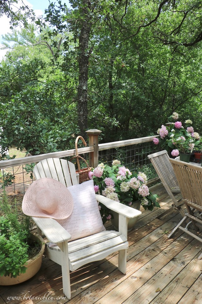 An open summer deck is perfect for growing pink hydrangeas in large containers