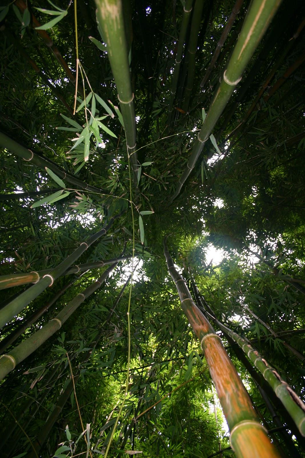 Bamboo Lamp Photo Bamboo Jungle