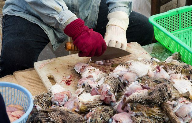 Racun Ikan Buntal Tewaskan 4 Orang Anak Di Malang