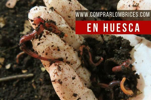 Dónde Comprar Lombrices en Huesca