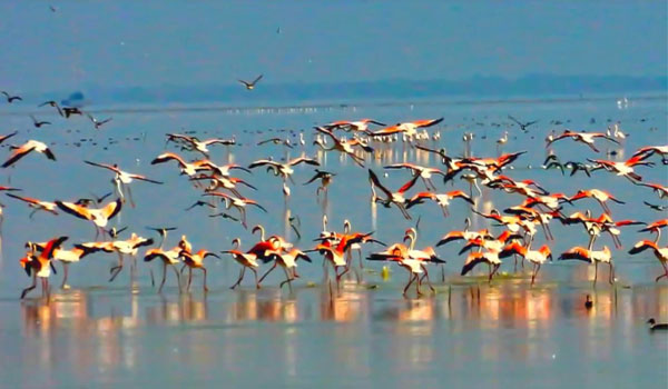 Pulicat Lake Bird Sanctuary