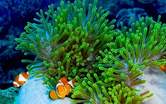 keindahan bawah laut wakatobi, terumbu karang wakatobi