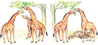 evolusi jerapah