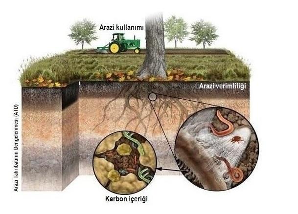 Ormansızlaşma ve Çölleşmeyi Durdurmak