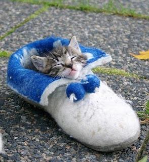 靴が大好きな可愛い猫5