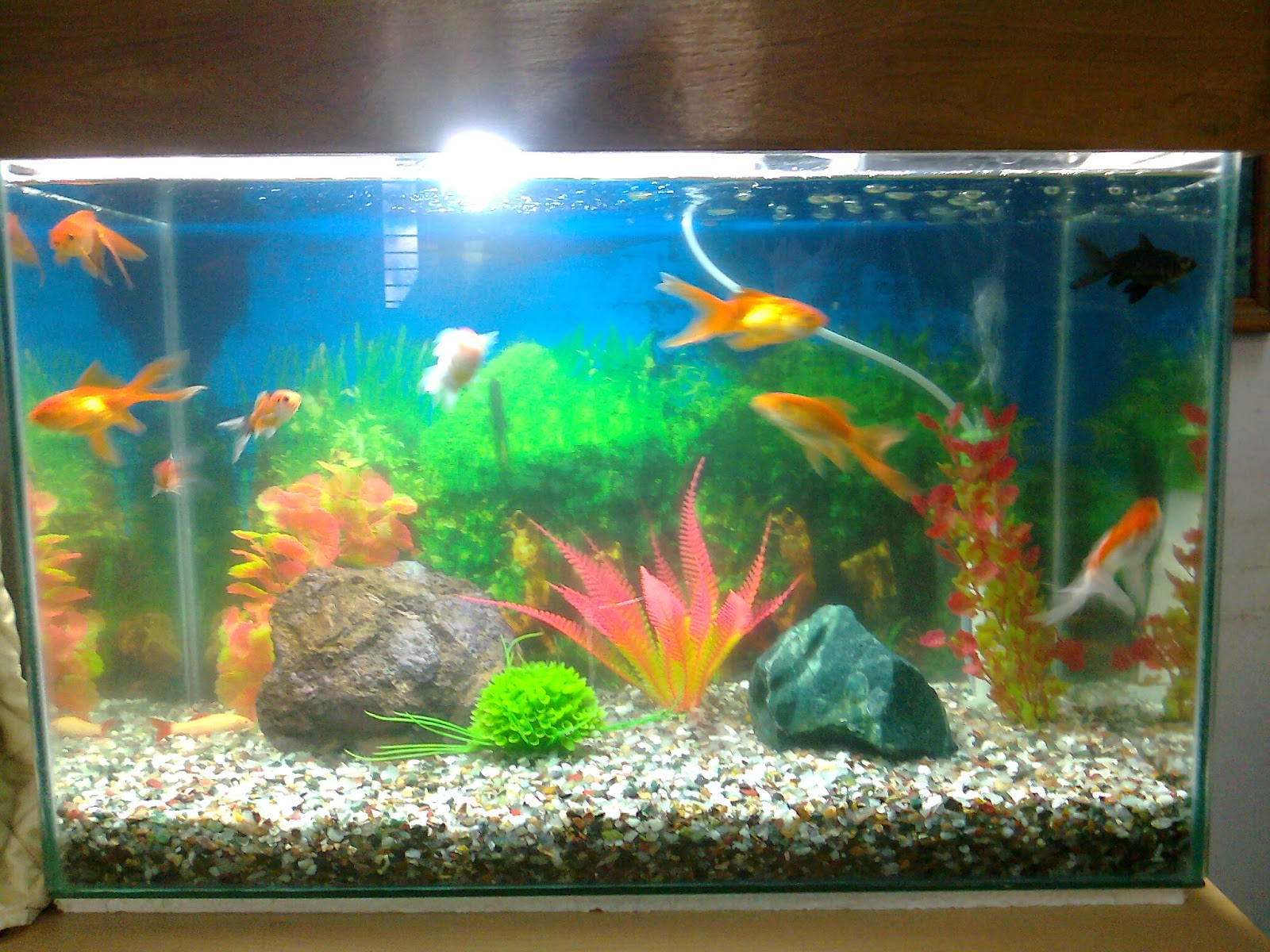 Different types of aquarium pics different types of for Pet koi fish tank