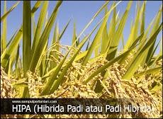 Pengertian HIPA (HIBRIDA PADI atau Padi Hibrida)