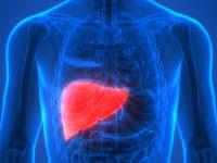 Definisi Organ hati, Anatomi, Fungsi Serta Gangguannya Pada Sistem Ekskresi Manusia