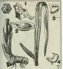 Cultivo del Cálamo