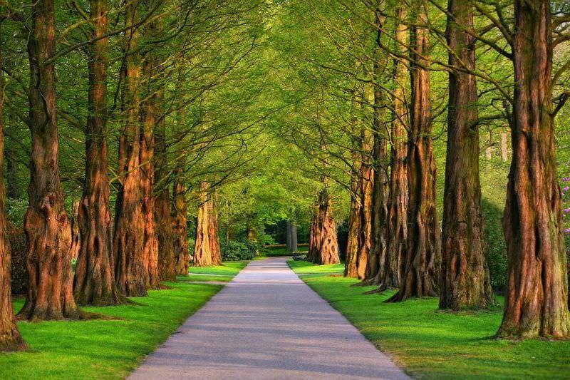 avenida de árvores