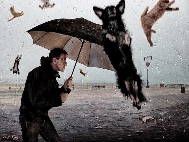 【英國腔 Idioms】別再說 It's Raining Cats and Dogs 這種復古的詞了,5 個「活在當下」的 Idioms 學起來!