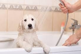 banho para cães