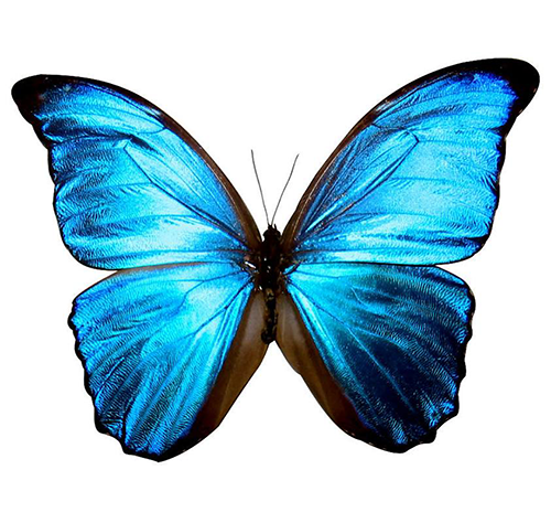 Butterfly emoticon