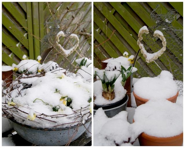 Gartentisch mit Frühlingsblühern im Schnee