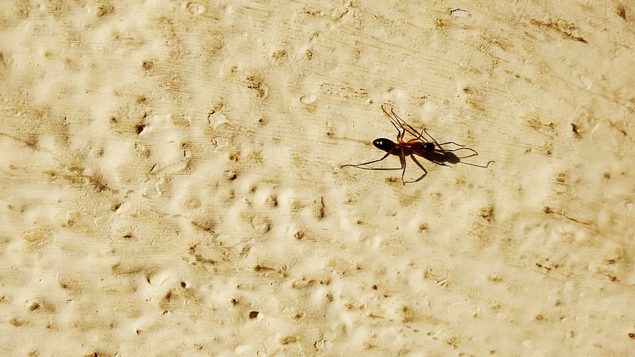 Ilustrasi seekor semut