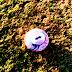 Copa Aramis Polli de futebol terá quatro jogos neste domingo