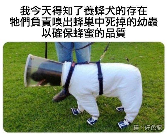 https://1.bp.blogspot.com/-qznjN7EnXgs/YJJdWC1pzxI/AAAAAAABB6Y/MCdBlAMrobs0Esah3yvDvNVRMd7b2JTiACLcBGAsYHQ/s16000/19_bee_dog.jpg