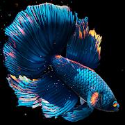 Betta Fish Live Wallpaper [Unlocked]