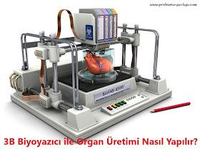 3B Biyoyazıcı Nedir? 3B Biyoyazıcı Nasıl Çalışır? 3B Biyoyazıcı ile Organ Üretimi
