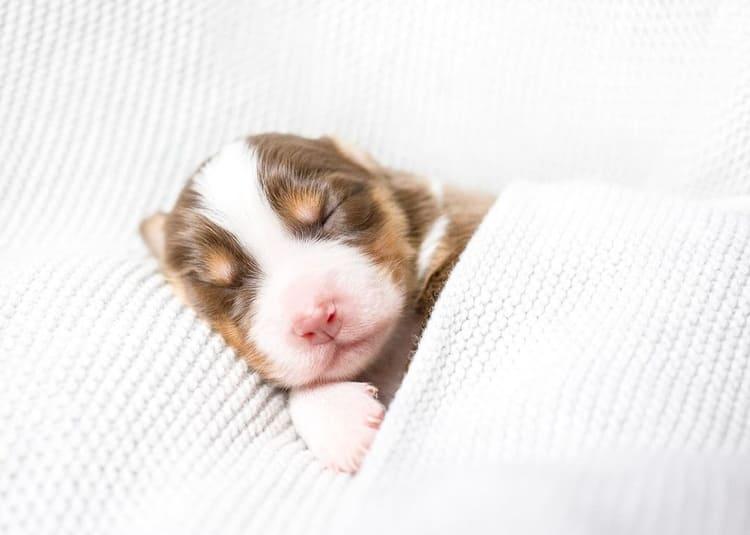 How Much Sleep Do Puppies Need