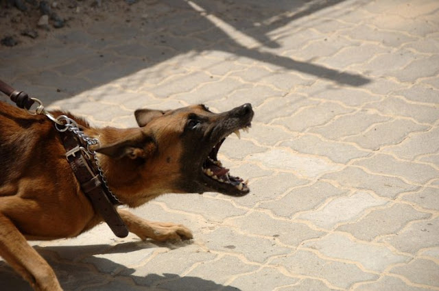 Наука подтвердила и объяснила, каким образом собаки распознают «плохих» людей