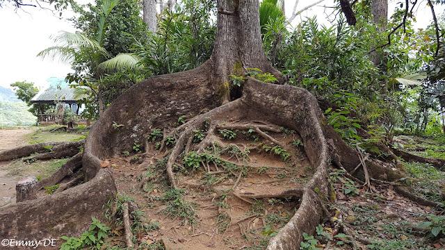 Mission ruins of Venn's Town ~ Mahé ~ Seychelles by ©Emmy DE