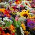 Λουλούδια που μπορούν να θεραπεύσουν ασθένειες