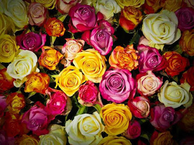 lựa chọn mua hoa hồng tươi để cắm