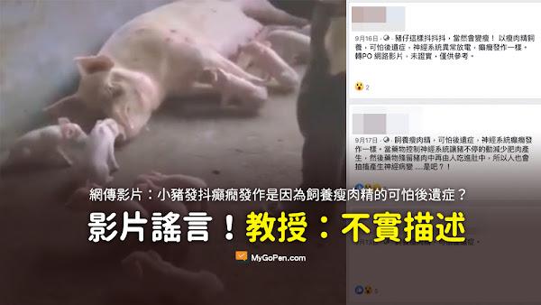 飼養瘦肉精 可怕後遺症 謠言 癲癇發作一樣 異常放電 小豬 發抖 影片