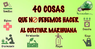Errores frecuentes en el cultivo de marihuana
