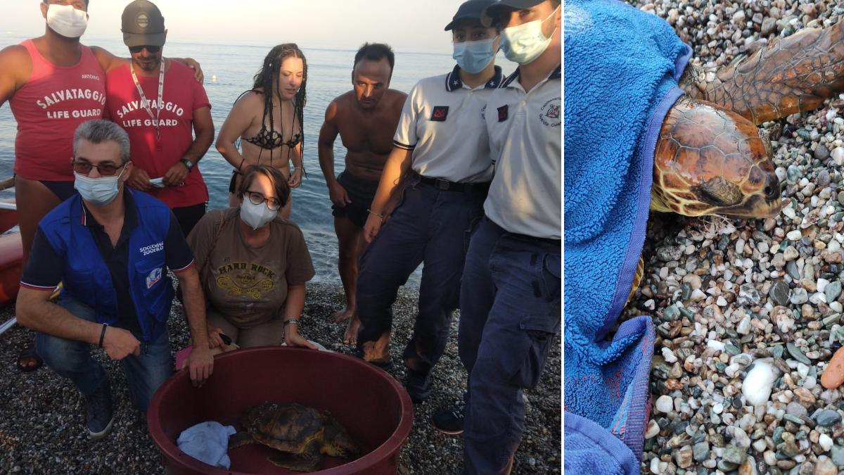 Salvataggio Tartaruga Caretta Caretta spiaggata con amo infilzato Fiumefreddo di Sicilia