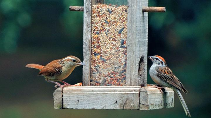 lowes bird feeders