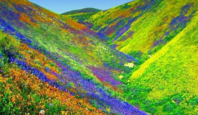 फूलों की घाटी