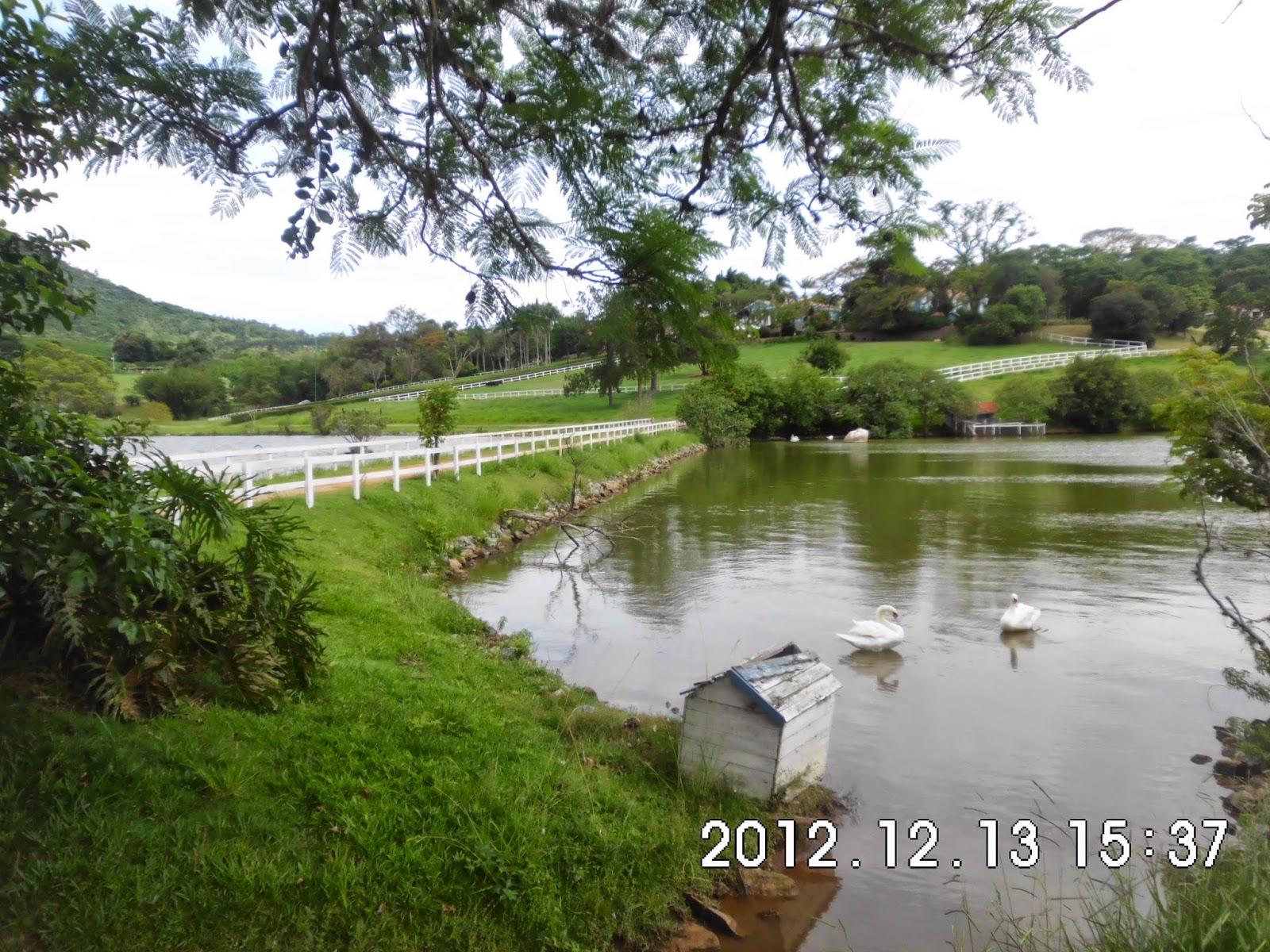Construção de lagos e embelezamento de lagos com muros de pedra, os piquetes dos cavalos em volta e a execução do paisagismo.