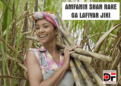 Amfanin Shan Rake Ga Lafiyar Jiki