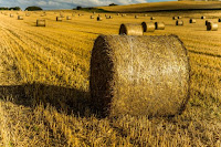 Hay Harvest Photo by Simon Birt on Unsplash