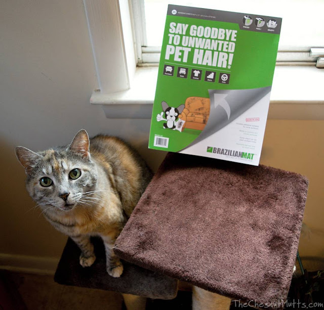 Mini Review: BrazilianMat Pet Hair Removal Tool