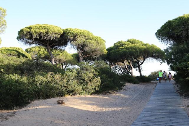 Parque periurbano Pinar de la Barrosa