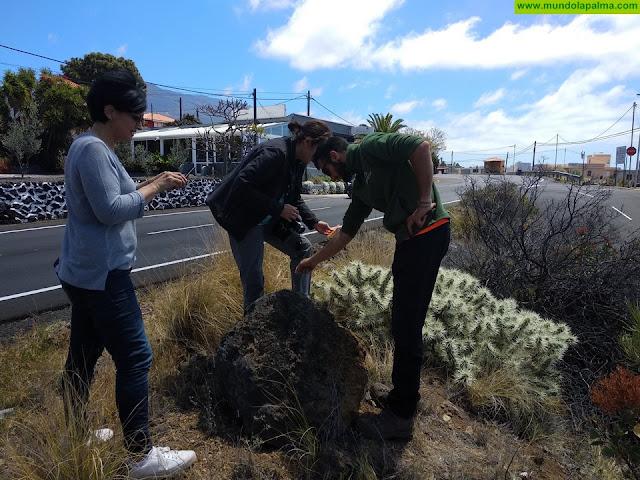 Política Territorial actúa en La Palma contra una nueva planta invasora localizada este fin de semana