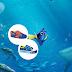 Procurando Dory: lançamento da Disney chega na Sugar Shoes