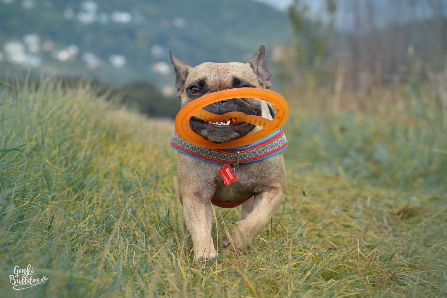 Bionic Tug n'Toss Hundespielzeug Hundefrisbee