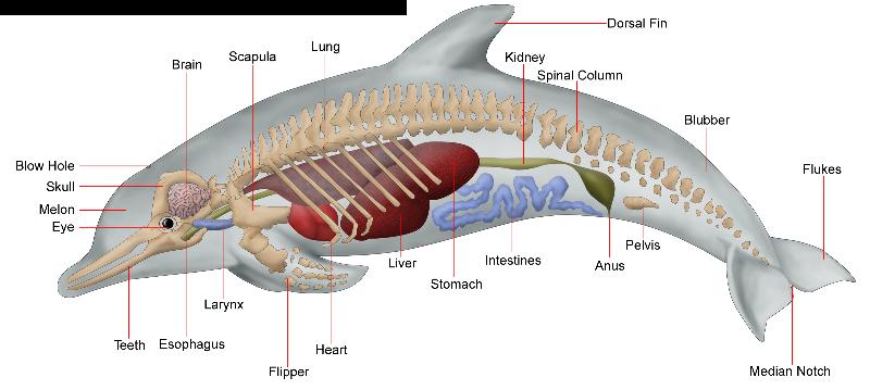 700+ Gambar Organ Pernapasan Pada Hewan Mamalia Gratis